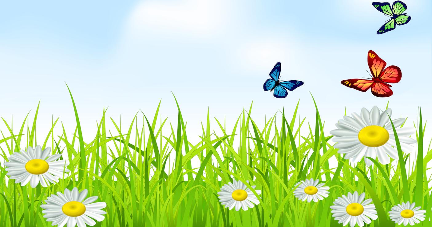 Бабочка на лужайке картинки